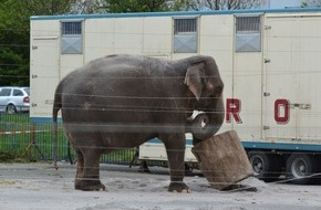 """Aktionsbündnis """"Tiere gehören zum Circus"""": Zirkus in Tuttlingen: Das von OB Beck angestrebte Wildtierverbot passt nicht in eine aufgeklärte Gesellschaft (FOTO)"""