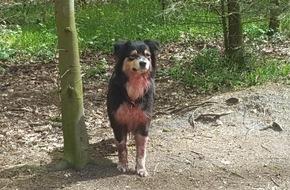 Polizeidirektion Bad Segeberg: POL-SE: Tangstedt: Immer wieder Ärger mit unangeleinten Hunden im Wald rund um Tangstedt/Stormarn