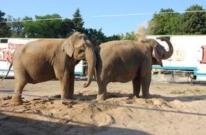"""Aktionsbündnis """"Tiere gehören zum Circus"""": Zirkus-Wildtierverbot in den Niederlanden: Aktionsbündnis """"Tiere gehören zum Circus"""" drückt sein Unverständnis aus und hält deutsche Regelungen für sinnvoller"""