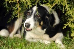 VIER PFOTEN - Stiftung für Tierschutz: VIER PFOTEN gibt Tipps gegen Tierische Panik am 1. August