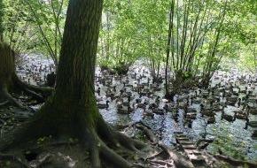Komitee gegen den Vogelmord e. V.: NRW: Tausende zahme Zuchtenten für die Jagd ausgesetzt / Anzeigen gegen Revierpächter - Gewässer und Naturschutzgebiete beeinträchtigt