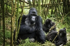 Constantin Film: Wunderbare Liebeserklärung an die Natur: AFRIKA - DAS MAGISCHE KÖNIGREICH ab 05.03.2015 im Kino