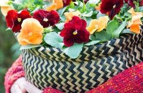 Blumenbüro: Robuste Gartenblüher setzen im Herbst Lichtpunkte auf Balkon & Terrasse / Herbstlicher Außenbereich mit dem facettenreichen Veilchen