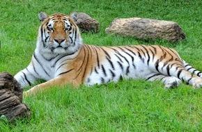 """Aktionsbündnis """"Tiere gehören zum Circus"""": Weihnachtszirkusse: Aktionsbündnis weist Anschuldigungen gegen den traditionellen Zirkus mit Wildtieren empört zurück"""