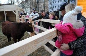 Hornbach Baumarkt AG: Berliner staunen: Kuhweide in Prenzlauer Berg (mit Bild)