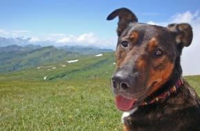 VIER PFOTEN - Stiftung für Tierschutz: Unbeschwerte Ferien ohne Tierjammer / VIER PFOTEN gibt Tipps