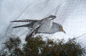 Komitee gegen den Vogelmord e. V.: Am Montag beginnt in Südeuropa die Jagd auf Zugvögel / Millionen Singvögeln droht Ende im Kochtopf