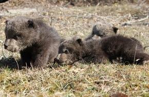 VIER PFOTEN - Stiftung für Tierschutz: Ein Leben in Freiheit für Ema, Oska und Ron / VIER PFOTEN überstellt die drei konfiszierten Bärenwaisen in den Nationalpark Sharri im südwestlichen Kosovo