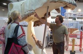 Messe Berlin GmbH: HIPPOLOGICA Berlin 2015: Expedition ins Pferdegebiss / Pferdegesundheit wichtiger Bestandteil der größten Reitsportmesse in der Hauptstadt