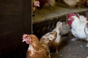 Migros-Genossenschafts-Bund: Migros setzt auf Schweizer Fleisch und bessere Haltungsbedingungen von Tieren im Ausland