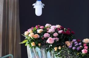 Blumenbüro: Topfrose ist Zimmerpflanze des Monats Juli / Träumen erlaubt! Märchenhaftes Wunderland mit Rosen