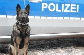 """Polizei Hamburg: POL-HH: 160622-1. Diensthund """"Akfa"""" stellt mutmaßlichen Fahrraddieb"""