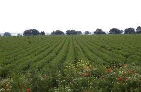 Rewe Group: Immer mehr Produkte von REWE Bio tragen das Naturland-Zeichen (mit Bild)
