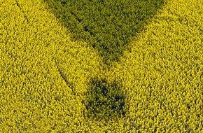 UFOP e.V.: Fortschrittliche Biokraftstoffe lassen auf sich warten