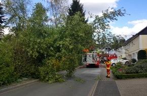 Feuerwehr Heiligenhaus: FW-Heiligenhaus: KORREKTUR Umgestürzter Baum auf der Straße (Meldung 9/2016)
