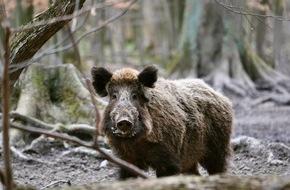 SWR - Südwestrundfunk: Durchgeknallt - Was bei der Jagd falsch läuft / Dokumentation von Lutz Wetzel am Mittwoch, 29. Juni 2016, 21 Uhr im SWR Fernsehen