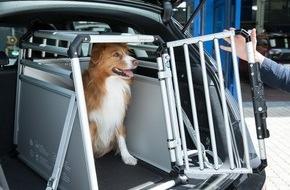 Allianz Suisse: Sécurité routière / En voiture aussi, les chiens doivent être attachés