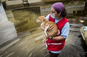 VIER PFOTEN - Stiftung für Tierschutz: Jahrhundert-Fluten in Chennai: VIER PFOTEN hilft betroffenen Tieren