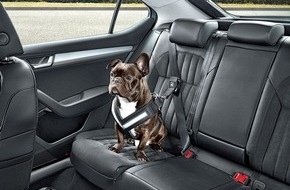 Skoda Auto Deutschland GmbH: Auf den Hund gekommen: SKODA bietet umfangreiches Zubehör für den sicheren und sauberen Transport von Vierbeinern