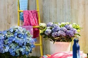 Blumenbüro: Happy Life im heimischen Garten / Farbenfrohes Sommerfest mit der Gartenhortensie