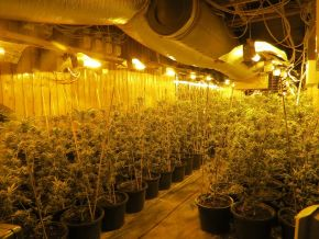 POL-DN: Cannabisplantage ausgehoben