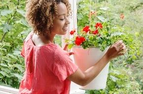 Blumenbüro: Pflanzenfreude.de kürt Balkon- und Terrassenpflanze des Jahres 2016 / Geranie und Hibiskus als optimales Outdoor-Duo