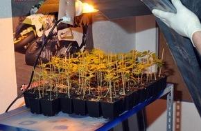 Polizeiinspektion Cuxhaven: POL-CUX: Polizei stellt Indoor-Plantage sicher