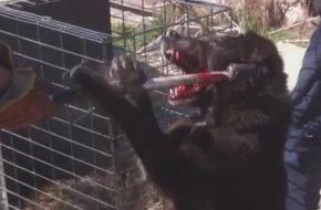 VIER PFOTEN - Stiftung für Tierschutz: Behörden misshandeln Hunde in VIER PFOTEN Klinik in Bukarest / Städtische Hundefänger dringen illegal ein, fangen Tiere brutal ein und bringen sie weg (Bild)