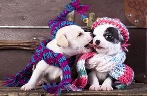 """CosmosDirekt: Wussten Sie eigentlich, dass es einen Tag der Haustiermode, den """"Dress Up Your Pet Day"""", gibt?"""