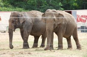 """Aktionsbündnis """"Tiere gehören zum Circus"""": Wildtiere im Zirkus: Bundesratsinitiative auf wackligen Beinen"""