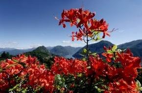 Ticino Turismo: Aufblühen im Tessin - Die schönsten Tessiner Parks im Portrait (BILD/ANHANG)