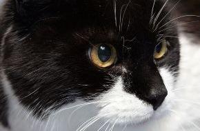 Berufsgenossenschaft für Gesundheitsdienst und Wohlfahrtspflege: Gefährlicher Bakteriencocktail: Katzenbisse sind nicht harmlos
