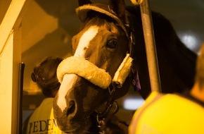 FEI Fédération Equestre Internationale: Mögen die Spiele beginnen! Die ersten olympischen Pferde treffen in Rio de Janeiro ein!