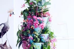 Blumenbüro: Kängurublume, Gloriosa und Medinilla bringen den Sommer / Tropenschönheiten sind Zimmerpflanzen des Monats Mai