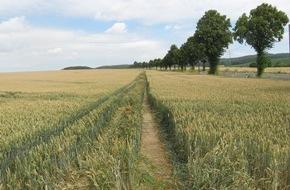 Polizeiinspektion Hildesheim: POL-HI: Betheln: Pkw fährt über 1 Kilometer durch ein Mais-/ und Weizenfeld