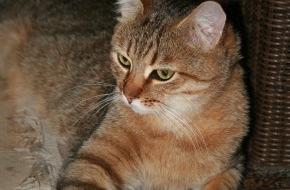 VIER PFOTEN - Stiftung für Tierschutz: Heute ist Weltkatzentag: VIER PFOTEN ruft zur Kastration von Hauskatzen auf