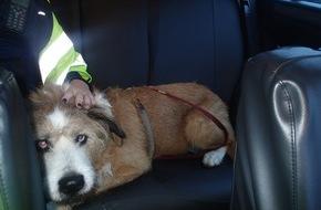 Hund verursacht Unfall