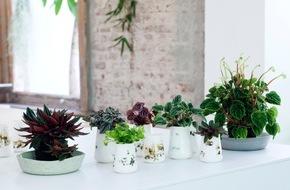 Blumenbüro: Zwergpfeffer ist Zimmerpflanze des Monats April / Abwechslungsreiche Wohlfühlpflanze in handlichem Format