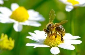 toom Baumarkt GmbH: Blütenparadies für fleißige Bienen / toom Baumarkt gibt Tipps zur bienenfreundlichen Gartengestaltung