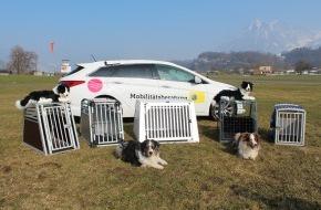 Touring Club Schweiz/Suisse/Svizzero - TCS: Hunde im Auto: Transportboxen gewährleisten die Sicherheit
