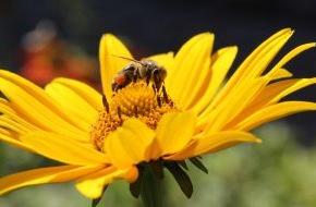 """Deutscher Imkerbund e. V.: """"More than honey"""" - mehr als noch ein Film zum Bienensterben und nicht nur für Imker sehenswert"""
