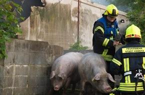 Kreisfeuerwehrverband Plön: FW-PLÖ: Etwa 150 Schweine verendeten bei einem Feuer auf dem Gut Bredeneek bei Preetz. 50 Schweine konnte die Feuerwehr retten.