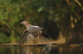Panasonic Deutschland: LUMIX G70: Wildlife-Fotografie wie bei den Profis / Mit der 4K Funktion für Serienbilder und Videosequenzen fangen Tierfotografen immer den richtigen Moment ein