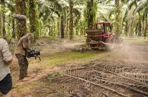 """ARD ZDF: ZDF-""""planet e.""""-Doku von Kino-Regisseur Kurt Langbein über den Palmöl-Boom als Öko-Problem"""