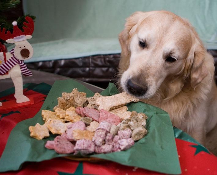 An Weihnachten tierische Freude schenken / Tipps für Weihnachtsmann, Christkind & Co.