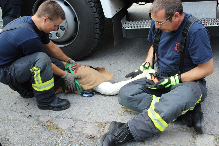 FW-DO: Hilflos auf der Ruhr treibender Schwan durch die Feuerwehrgerettet