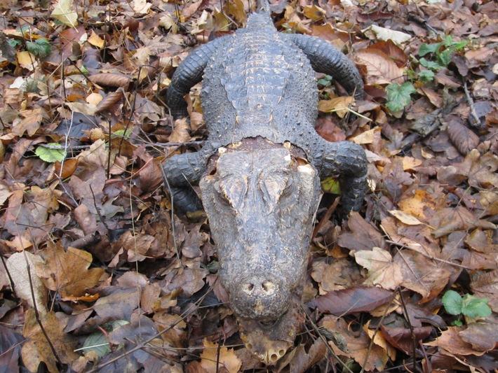POL-DA: Modautal: Krokodil im Wald ausgesetzt