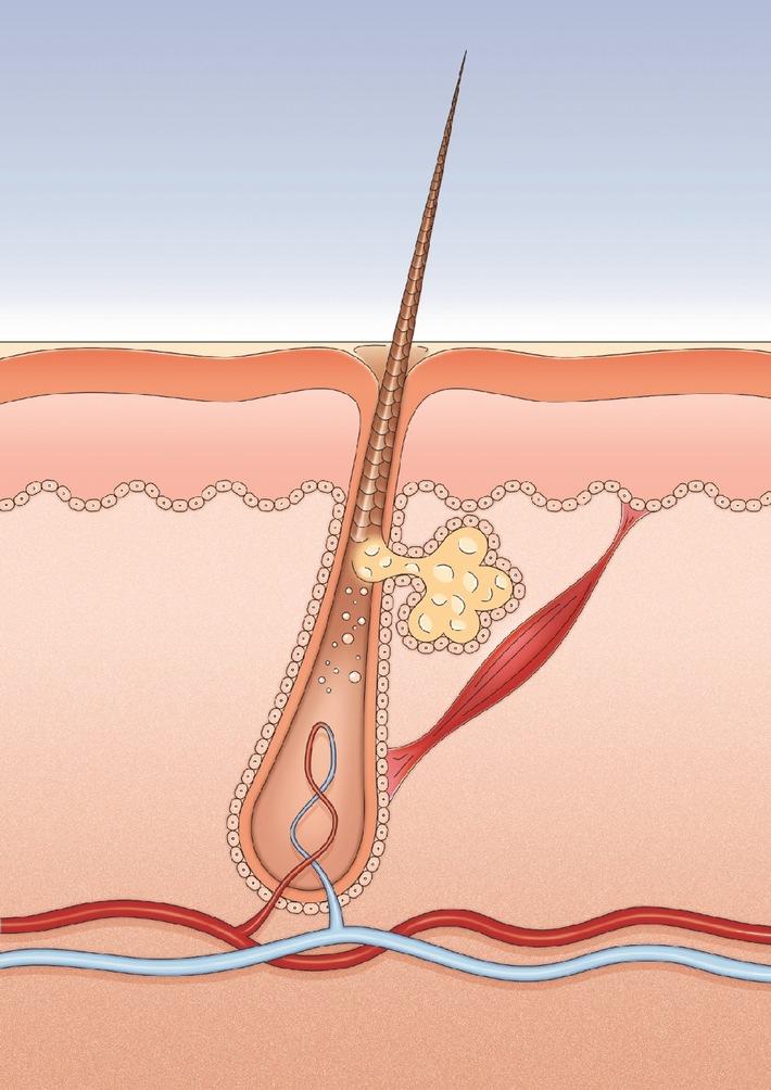British Journal of Dermatology veröffentlicht neue Studie / Coffein fördert Haarwachstum