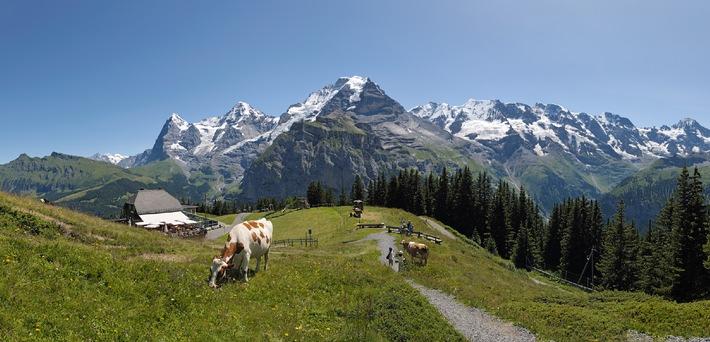 Aktiv am Schilthorn: Adrenalin und Entspannung / Mürren - Schilthorn als Aktiv-Erholungsgebiet im Sommer