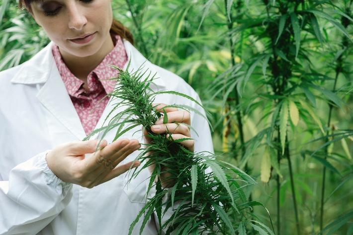 Patienten bei Cannabis-Anwendung nicht im Stich lassen
